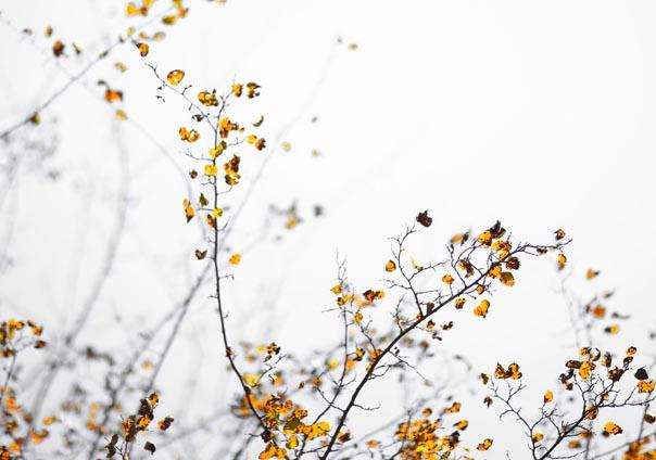 Benim Sonbahar